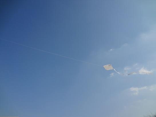 A kite! A kite! I adore kites!