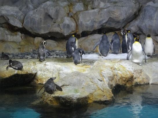 Penguins. In the tropics. Hmm.