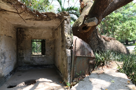 An acacia tree that survived a bomb explosion. Go, tree, go!